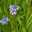 DSC_2730  Zomerbloemen tussen het gras.