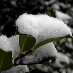 Sneeuw