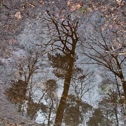 Regenachtige dag in het bos