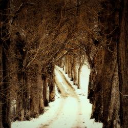 december  laantje in de sneeuw