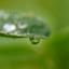 Waterdruppel in de ochtend