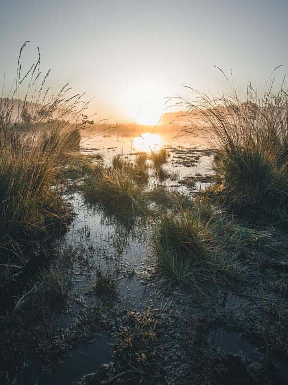 Swamp rise. - Nothing beats a good sunrise.<br /> <br /> Volg me gerust op:<br /> https://www.facebook.com/ShotByCanipel/<br /> https://www.instag