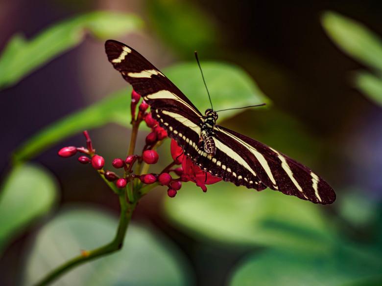 Wildlands juni 2018-71 - Deze foto is genomen op een warme zomerse dag, de vlinders waren behoorlijk actief. Met deze foto had ik geluk dat ze even st
