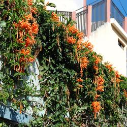 De bloemetjes buiten hangen