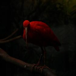vogel in blijdorp