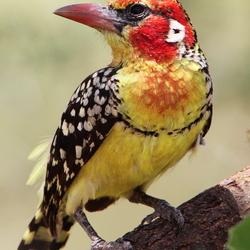 Bont gekleurde vogel