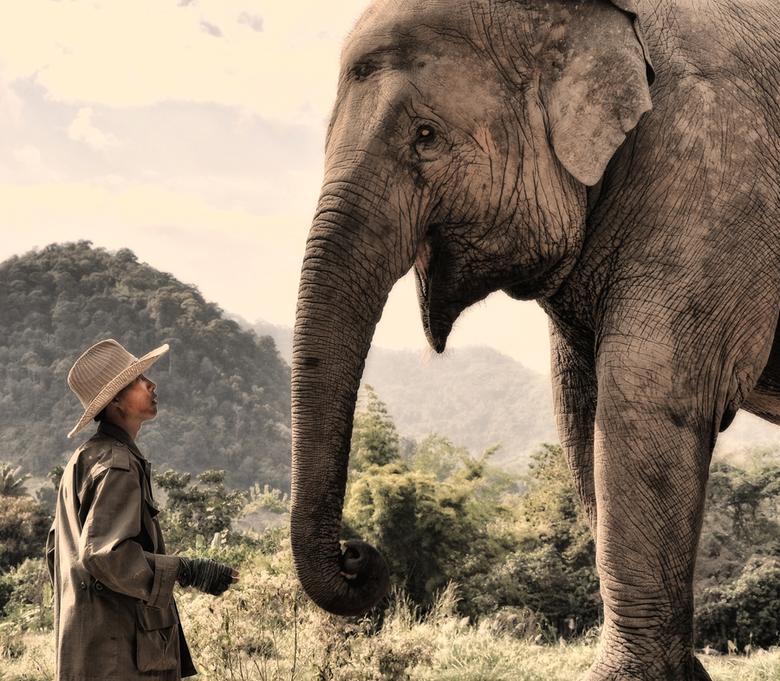 The approach - De mahout benadert 'zijn' olifant