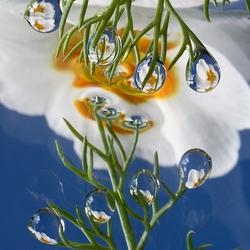 """Bloemendruppels """"Reflections"""""""