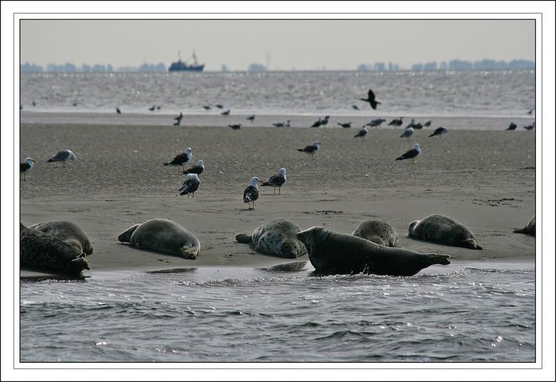 Even stil a.u.b.! - Deze foto heb ik een tijdje terug genomen in de Waddenzee bij Texel<br /> tijdens een tocht met een garnalenkotter. Er werd verzo
