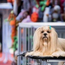 Hond2016