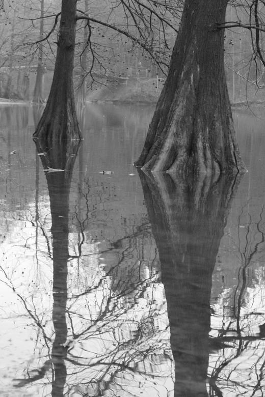 2boom - weerspiegeling