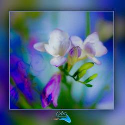fotoschilderij................