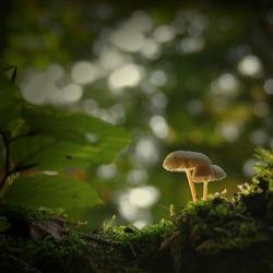 Mysterious mushroom