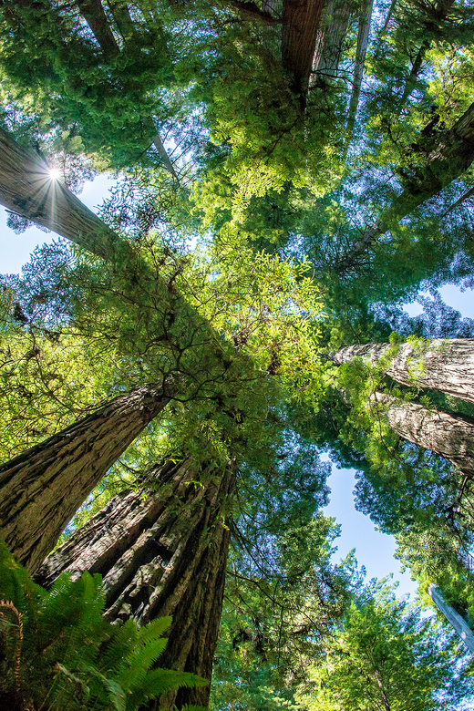 Redwood National and State Park -