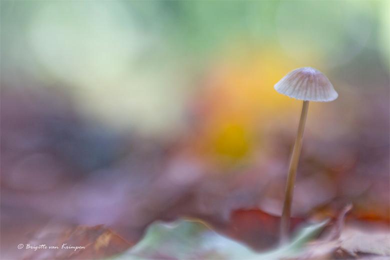 Forest pastels - Iedereen bedankt voor de reacties op mijn landschaps en zwart-wit uitstapjes.<br /> Er zullen in de toekomst nog wel wat meer experi