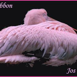 Bewerking: Mijn laatste pink ribbon bijdrage