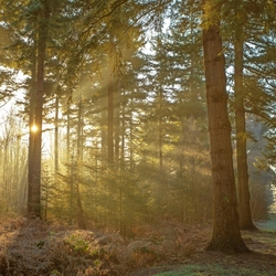 het gouden ochtendlicht
