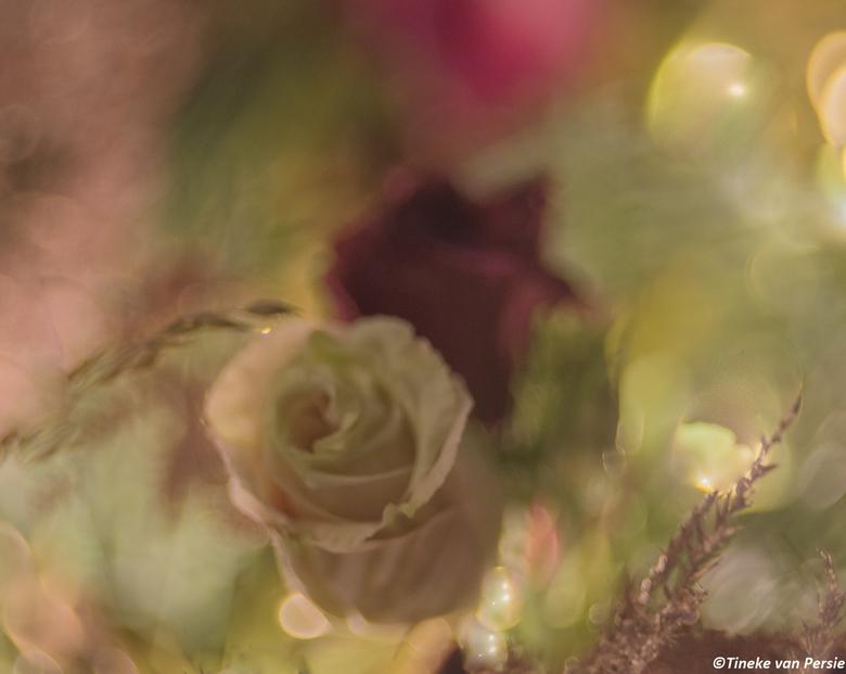 dreaming roses - Bloemen in mijn kerststukje, gefotografeerd met mijn Helios lens.