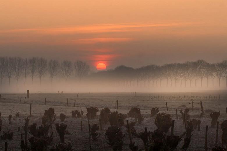 Misty morning.......