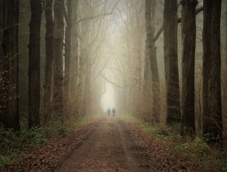 fietsen naar de licht