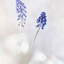 Dream flowers 2