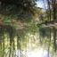 Uitzicht in het Overbosch te Voorhout