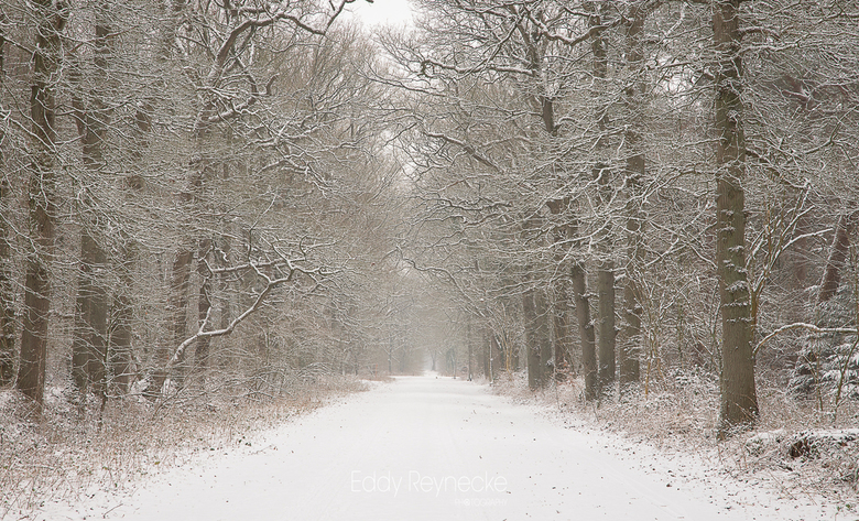 BEAUTY OF WINTER - Prachtige winterse sfeer in het Strubben Kniphorstbos bij Annen.