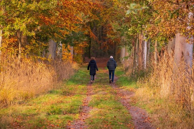 Boswandeling  - Op een mooie herfstdag