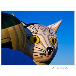 The cat's eyes