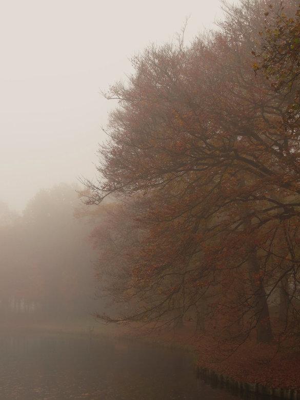 Herfst - Koepelbos