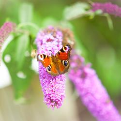 Wat de rups het einde noemt, noemt de rest van de wereld een vlinder.