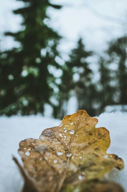 In de sneeuw - Laag beeld vanuit de sneeuw.