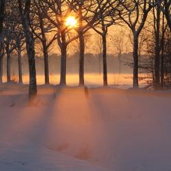 Bomen in sneeuw met nevel bij zonsondergang.