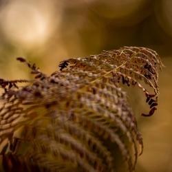 Vaarn  in herfstkleur