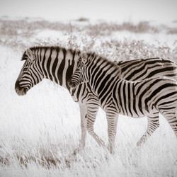 Striped stroll
