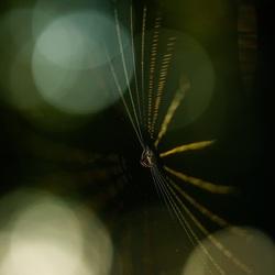 Als het zonlicht speelt met een web...