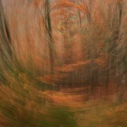 Hypnoforest