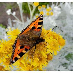 Vlindertje 2