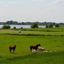 Wilsum Landschap