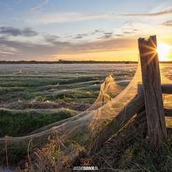 Enorme spinnenwebben op Texel. 3