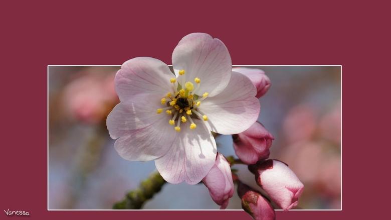 Joepie, het is lente 2 - Genieten van de bloesem<br /> groetjes Vanessa