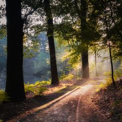 Follow the light....