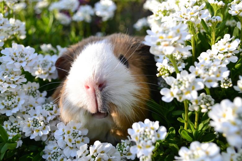 Loes tussen de bloemen -