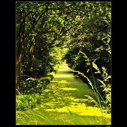 Groen groen en nog eens groen