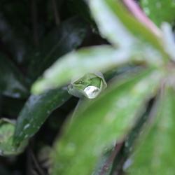 Waterdiamantje.