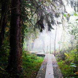 loopbrug in de mist