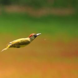 Vliegen zonder vleugels