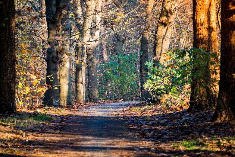 Boswandeling - Een lekkere frisse neus tijdens een boswandeling