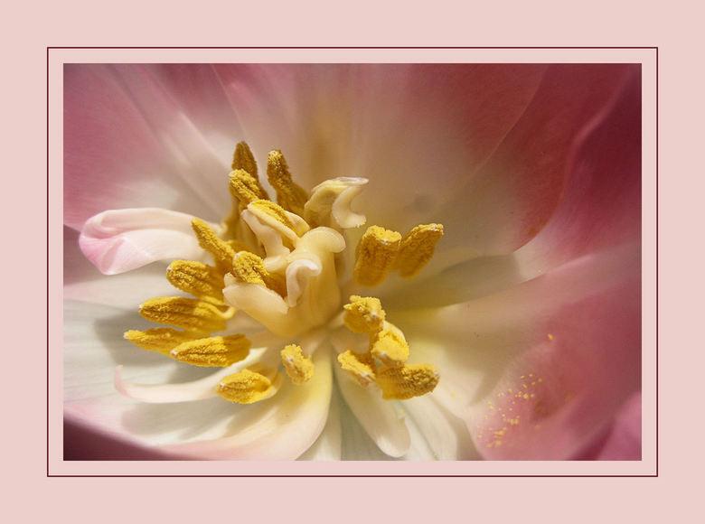 Een zonnig hartje - Vanmiddag in de tuin bezig geweest met wat tulpen en roosjes,heerlijk in het zonnetje<br /> Nu het weer beter gaat met mijn schou