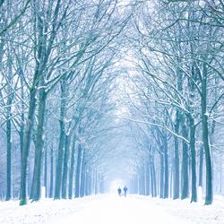 winterwonderlaan